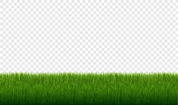 Green Grass Border Set Isolated Transparent Background, Vector Illustration
