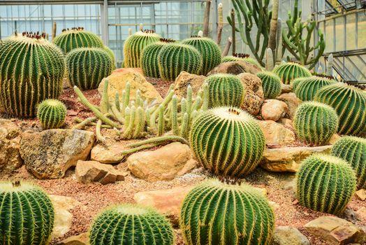 Cactus held in a garden that looks arid