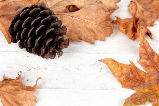 pine cone with leaves on white wooden planks