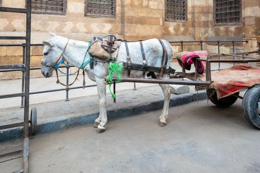 An image of a donkey in Cairo Egypt