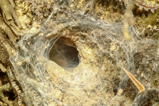 spider hole in soil at forest