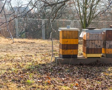 Three orange and yellow beehives in Prague botanical gardens, Troja. Vibrant colours, leaves on the ground and warm soft light for an autumn season concept
