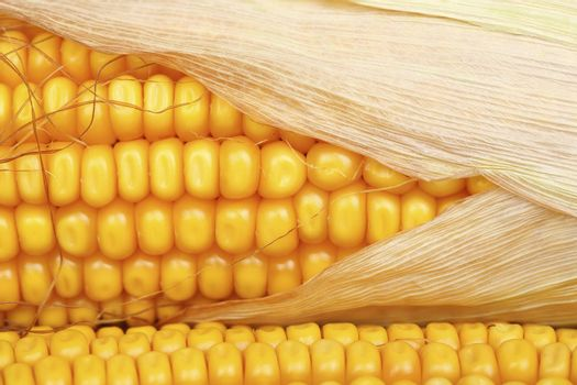 macro of corn for background use