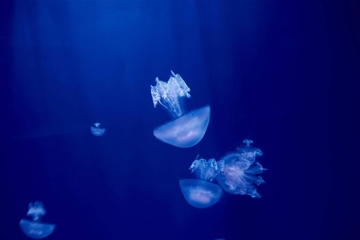 Jellyfish set, in the ocean, blue color, fluorescent