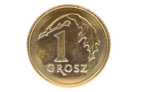 Closeup of 1 polish grosz coin isolated on white background with clipping path