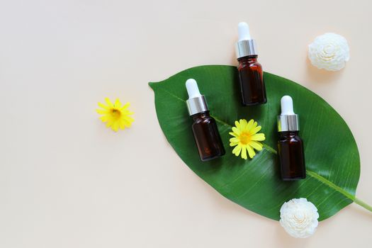 Flat lay of organic aromatherapy oils and beauty products for mock up with green leaves in minimal style