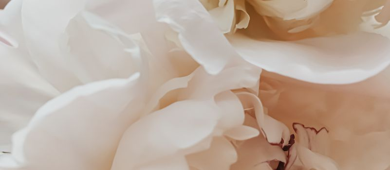 Beige peony flower as abstract floral background for holiday branding design