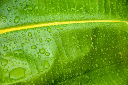 Closeup of water drops on a green leaf as natural background