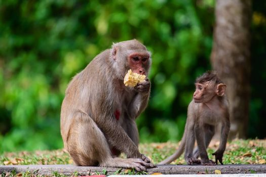 Monkey with baby sitting in the nature for animal and wildlife concept