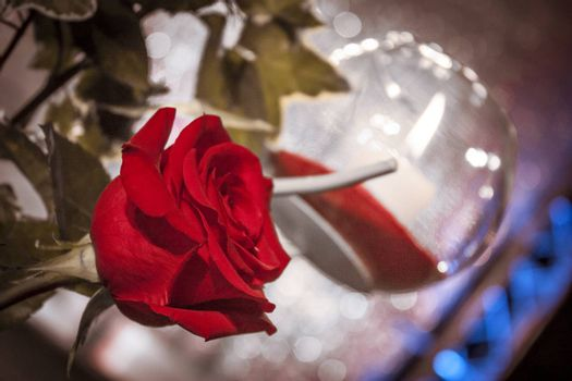 Decorative Composition with rose flower in exposition at night