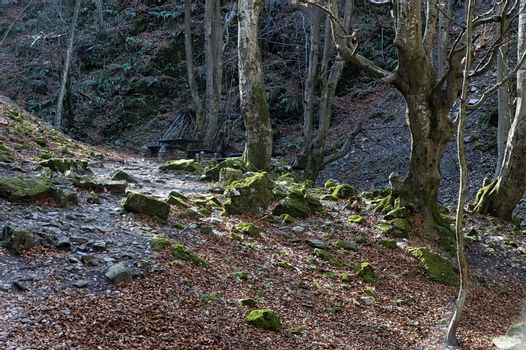 Autumn walk through the labyrinth of the Teteven Balkan with high peaks and river, Stara Planina, Bulgaria