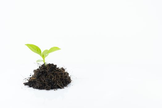 Germination of trees on a pile of soil, white background