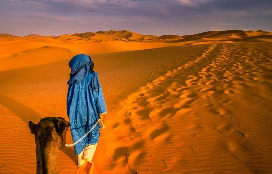 Berber leading a camel into the stunning sand dunes of Sahara desert in Merzouga, Morocco
