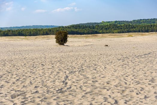View of Bledow Desert, the biggest sand accumulation away from any sea, located in southern Poland