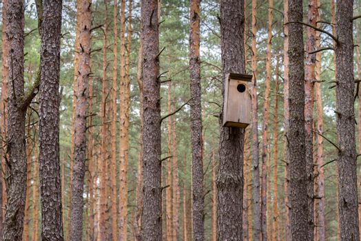 Birdhouse for the wild birds hanged on the tree in a forest
