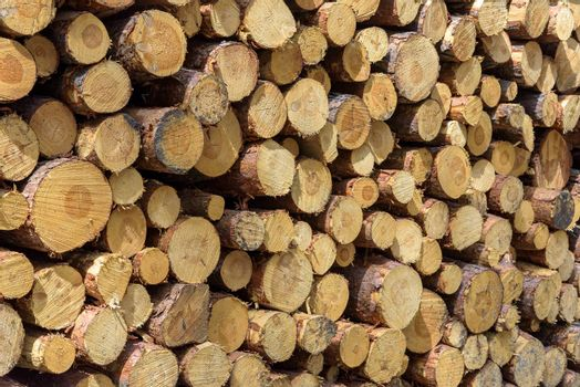 Closeup of pine wooden logs stack as a background