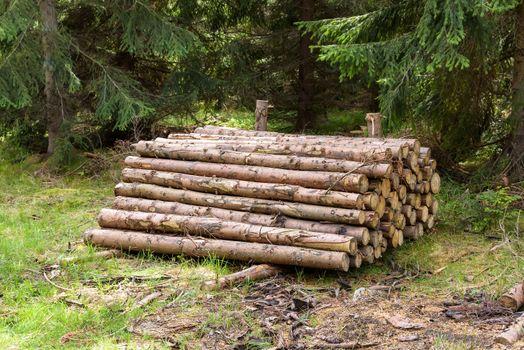 Heap of cut tree trunks in a forest