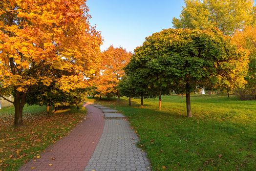 Beautiful colors of autumn in the park at sunset