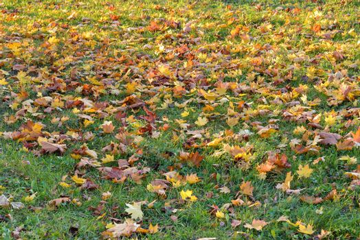 Colorful autumn leaves on the grass as natural background