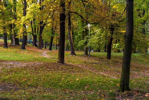 Evening view of the colorful park in autumn