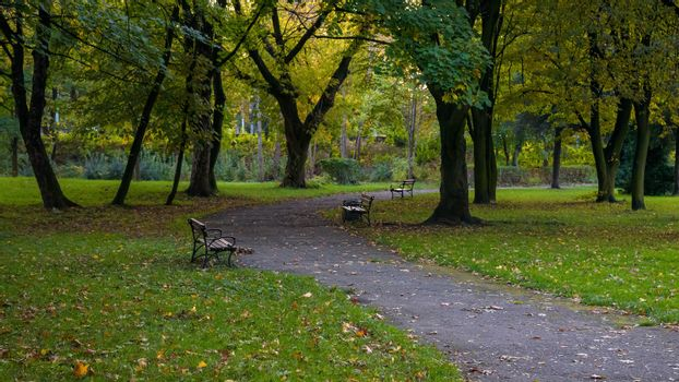 Benches at the alley in the park at autumn evening