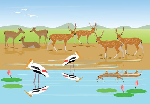 Herds of deer are resting along the stream,Painted Stork are walking in the water with grasslands and mountains as the background