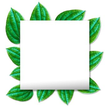 White paper with text greeting and Fresh pepper leaf . Clipping path included.