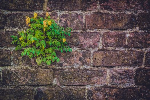 Flower growing on an old dark brickwall