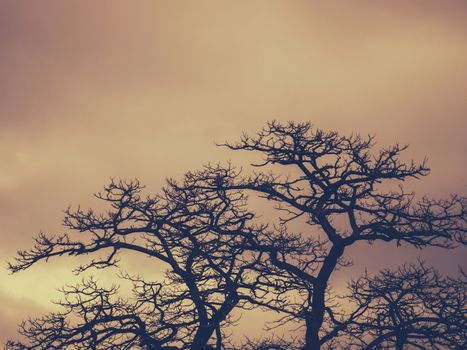 Leafless trees with the cloudy background in the evening