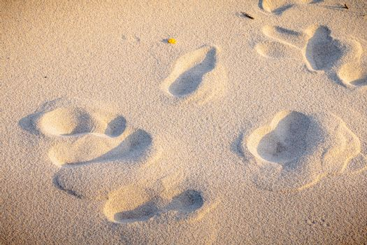 footprint in the fine sand by the sea in Portugal
