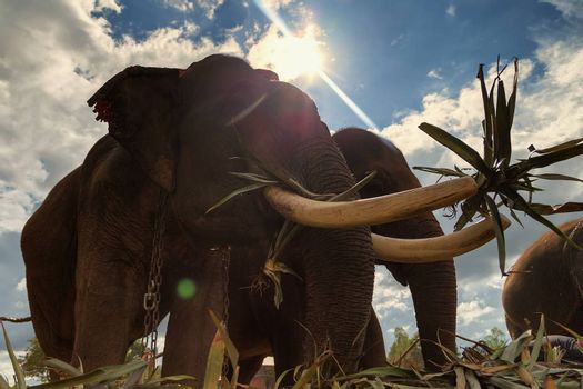 Elephants are eating in the warm sunshine on a bright day.