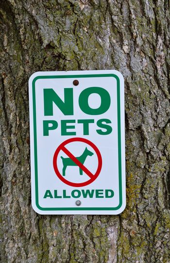 No pets allowed sign on tree in the park.