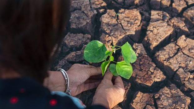Environment Concept. Hands holding a tree growing on cracked ground / Save the world / Environmental problems