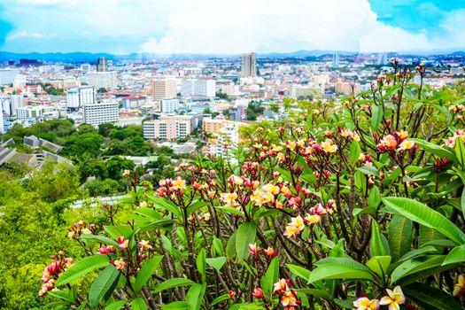 Plumeria,Frangipani red flower on mountain and blur of Pattaya c