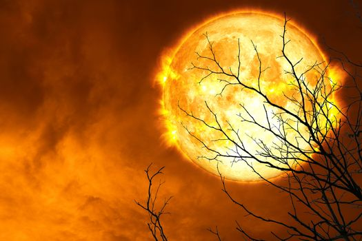 Explosive blood moon back silhouette dry tree and night sky
