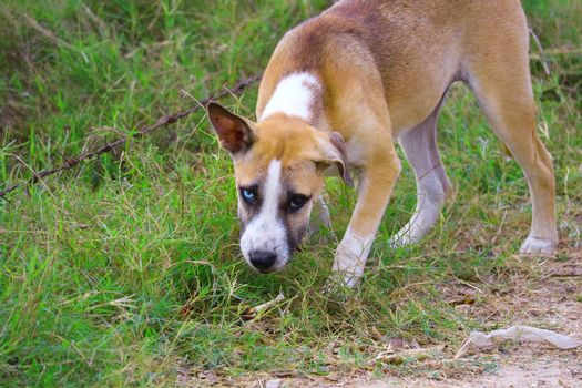 The two-eyed stray dog is caused by abnormalities of genes