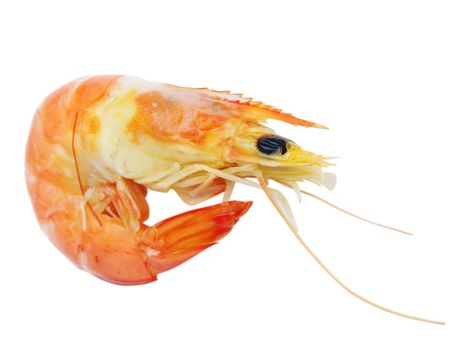 prawn closeup isolated on white