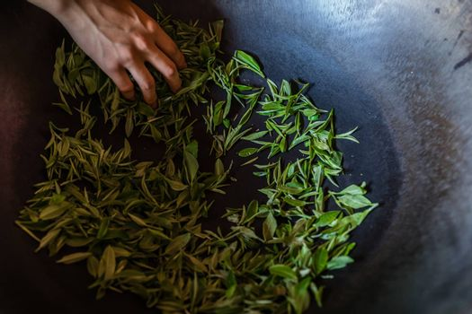 Woman mixing fresh tea leaves gathered from the plantation in a big hot metal bowl in a process that dries the leaves