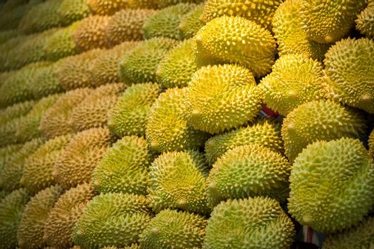 A closeup shot of a lot of fresh durian fruits in the market