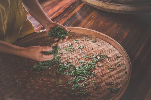A shot of fresh tea leaves gathered from the plantation spread on around wicker tray