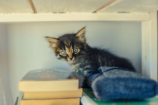 gray striped kitten sits on a white bookshelf