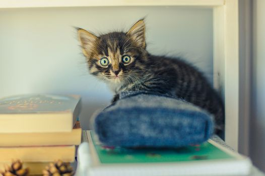 gray striped kitten sits on white book shelves