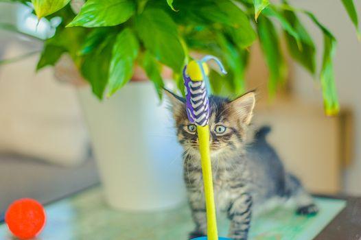 kitten sniffs a toy tumbler near a flowerpot with a plant