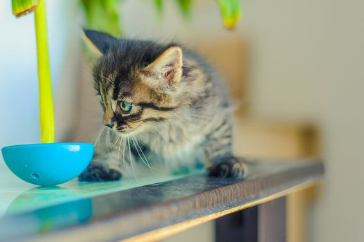 striped kitten sits on a table near a wobbly toy