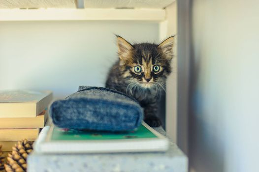 gray striped kitten with big eyes sits on white shelves