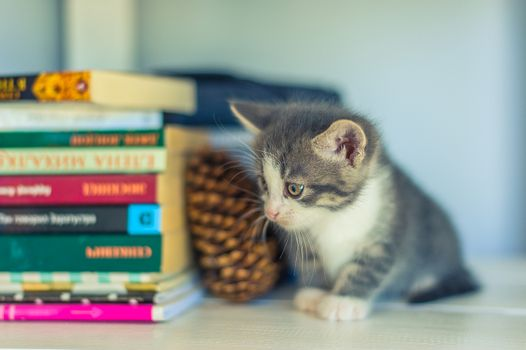 Gray kitten sits near books and cones