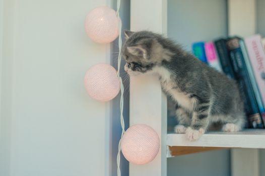 gray kitten is sitting on a bookshelf