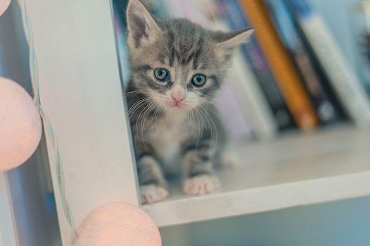 gray kitten sits on a shelf with books near the light