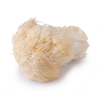 Yamabushitake mushroom or lion mane mushroom isolated over white