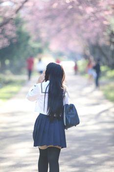 Japanese school girl dress looking sakura flower nature walkway